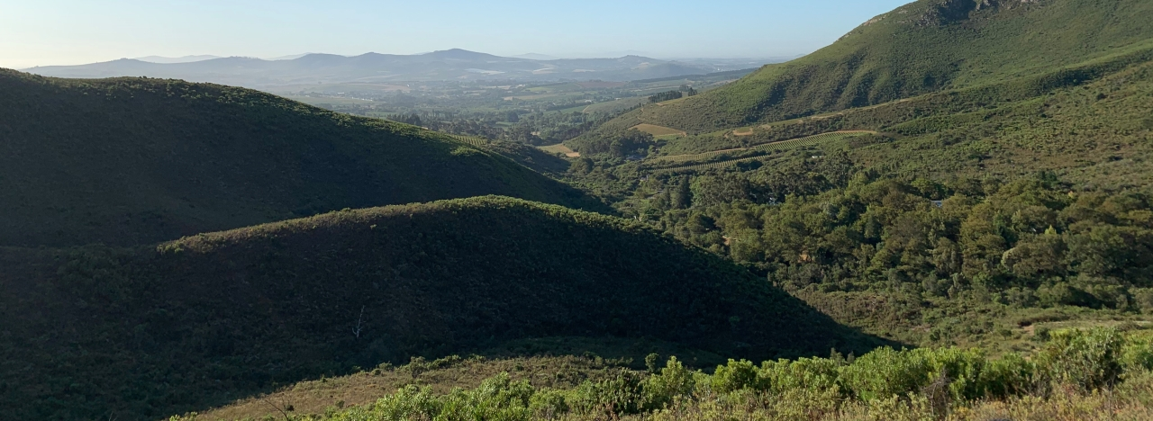 view of the wine hills around stellenbosch (South Africa). Everything is green and one can see very far.